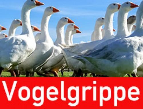 Handschuhe zum Schutz gegen Aviäre Influenza (Vogelgrippe -Vogelpest)