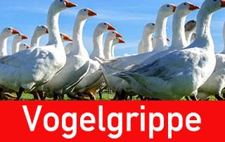 demSchriftzu Vogelgrippe - Vogelpest